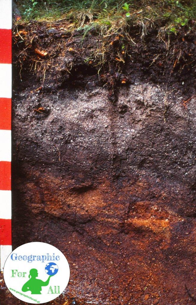 Profil glebowy / skład gleby, autor U. Burkhardt, źródło https://pl.wikipedia.org/wiki/Plik:Eisenhumuspodsol.jpg