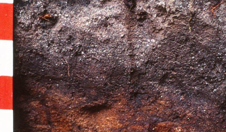 Profil glebowy, autor U. Burkhardt, źródło https://pl.wikipedia.org/wiki/Plik:Eisenhumuspodsol.jpg