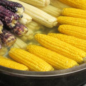 Różne odmiany kukurydzy, źródło: pixabay, Autor: focusonpc Licencja CC0