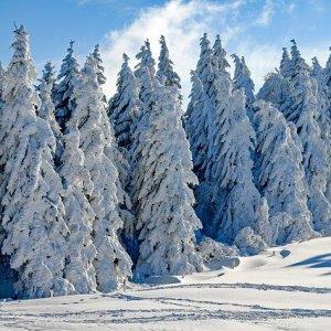 Dlaczego niektóre zwierzęta hibernują? sen zimowy