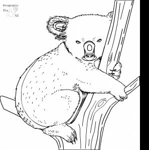 koala australia kolorowanki dla dzieci
