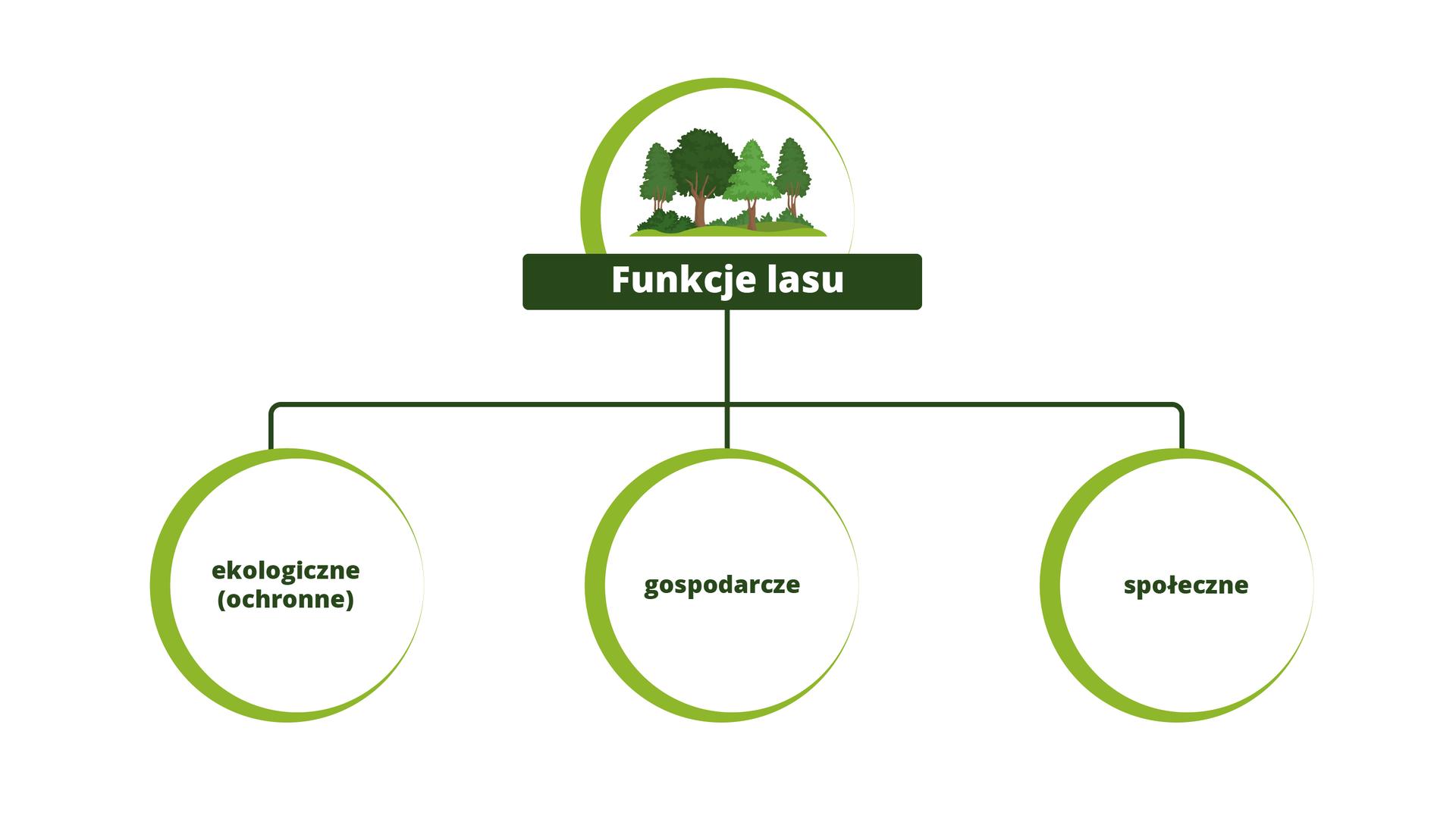 Funcje lasu, Źródło Englishsquare.pl Sp. zo.o., licencja – CC BY-SA 3.0.