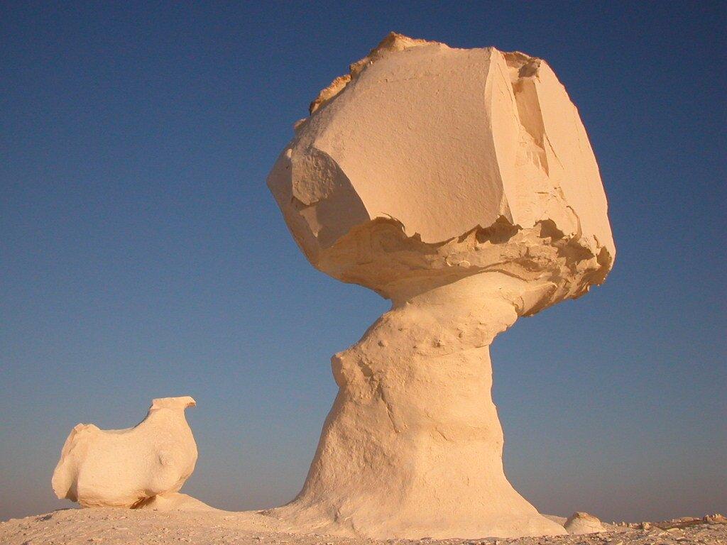 Grzyb skalny,Źródło domena publiczna, [online], dostępny winternecie httpscommons.wikimedia.orgwindex.phpcurid=1157453.