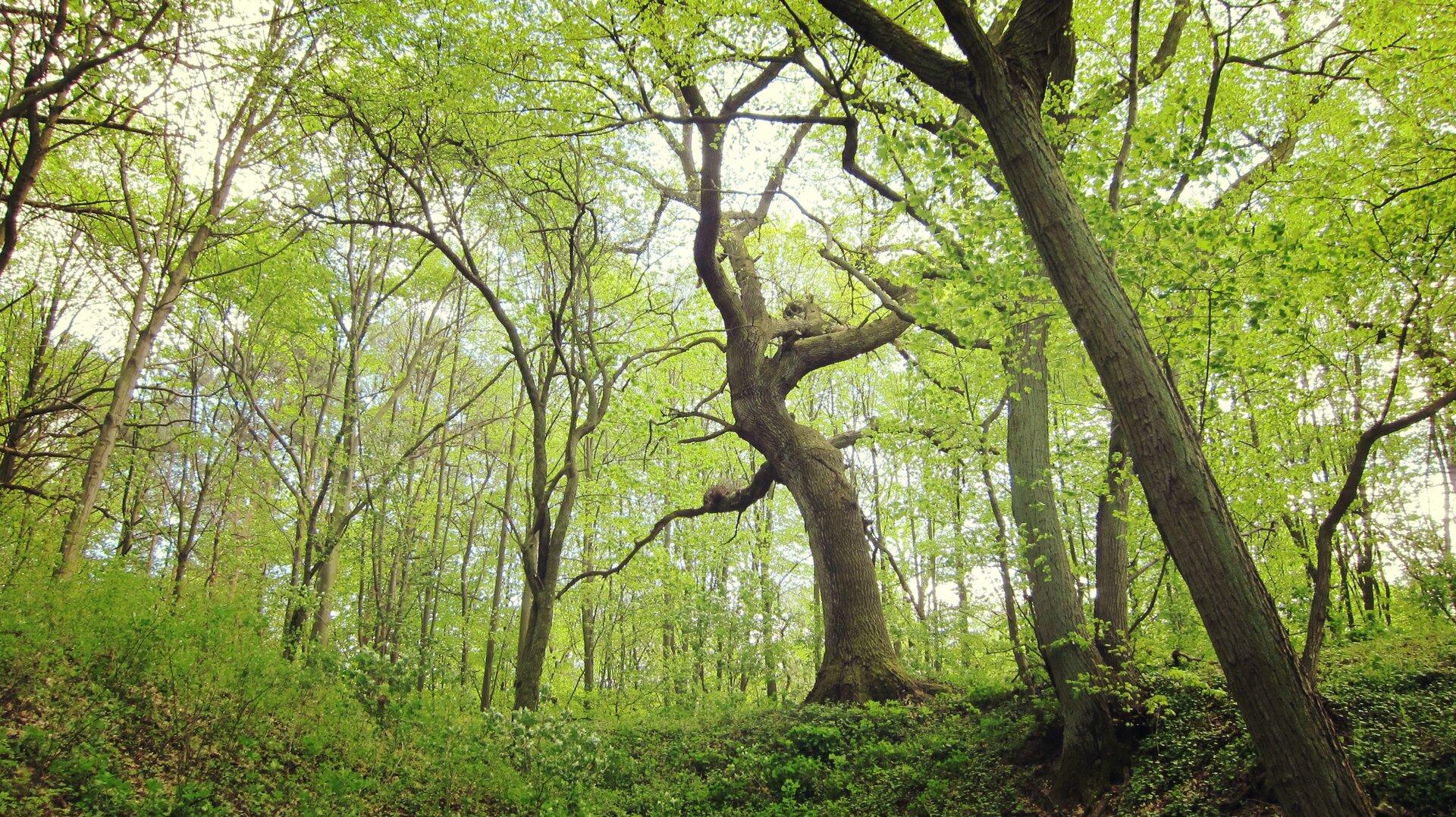 Przykład środowiska leśnego,Źródło autor Daria Konitz, Praca własna, CC BY-SA 3.0 pl