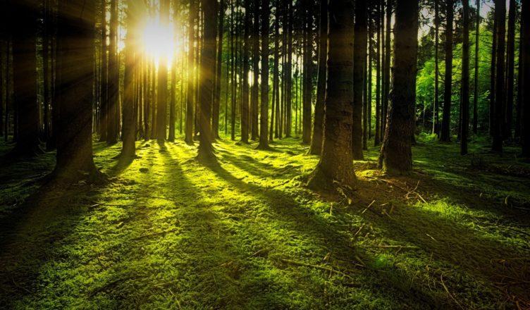 Zróżnicowanie lesistości w Polsce i na świecie