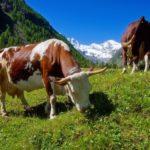 Przyczyny rozwoju i skutki rolnictwa uprzemysłowionego i ekologicznego